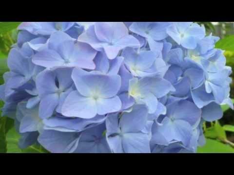 ヘフリガー(Ernst Haefliger)の日本歌曲