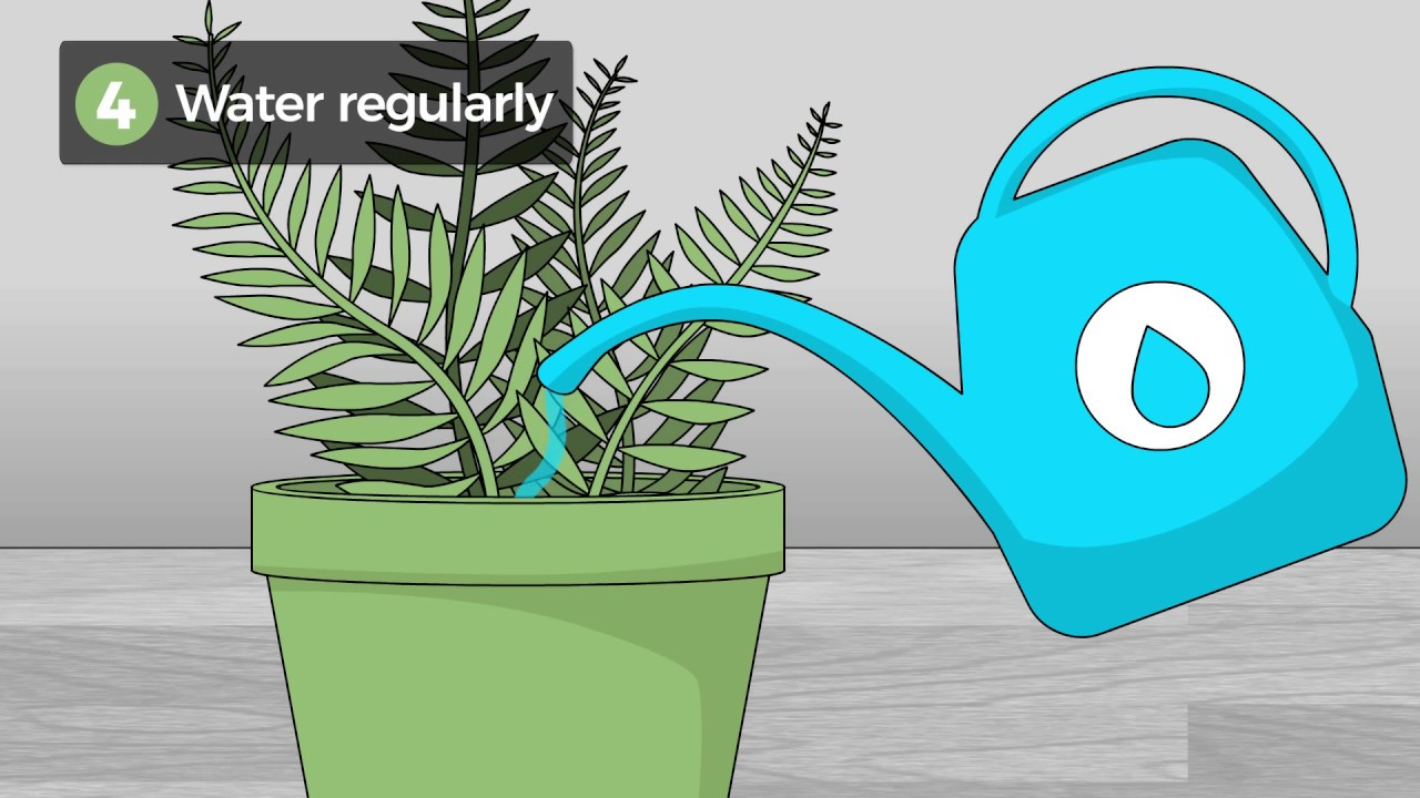 The 2 Best Ways to Care for Ferns - wikiHow