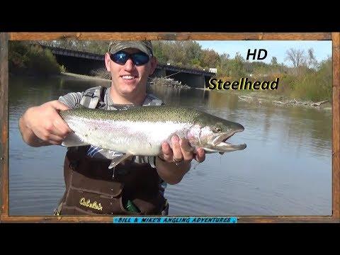 Clear Water October Steelhead Fishing - 18 landed