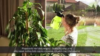 Domowe rośliny doniczkowe - szkodniki na liściach, choroby roślin doniczkowych