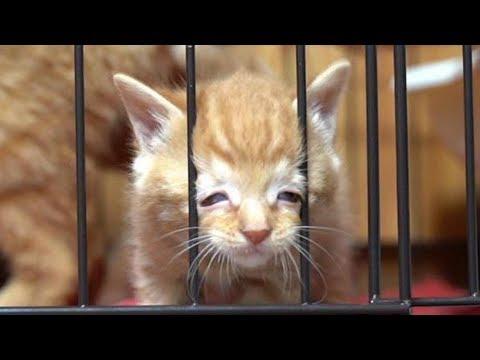 目が合うと走り寄ってくるかわいい子猫、脱走しようとして変顔になっちゃう子猫