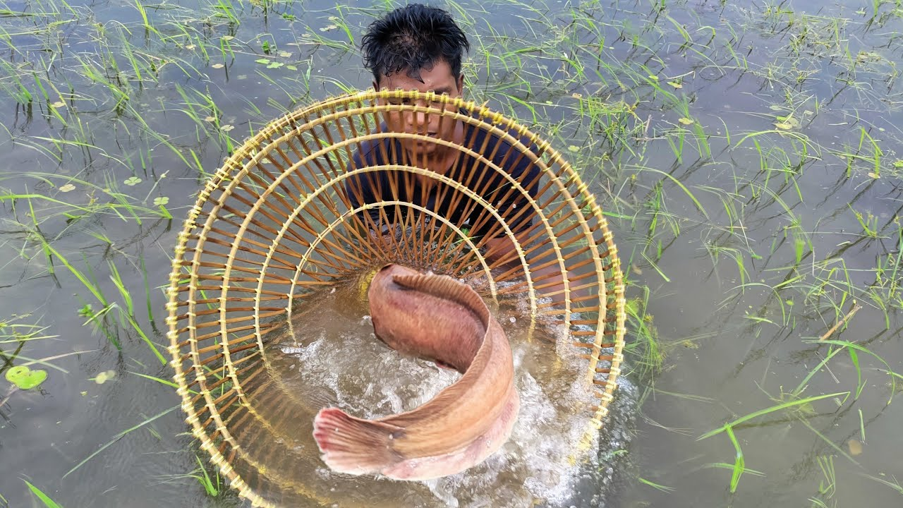 Unbelievable Polo Fishing Video |Natural Polo Fishing|Traditional Fishing By Bamboo Tools Fish