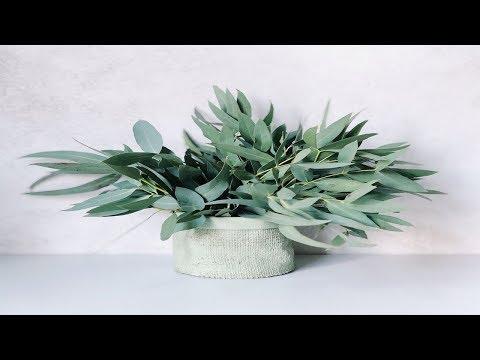propiedades-curativas-del-eucalipto-✱-el-eucalipto-y-sus-beneficios