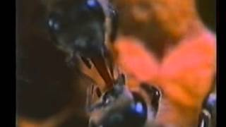 Интересные факты про пчел(Интересные факты о пчелах., 2016-02-13T23:44:57.000Z)