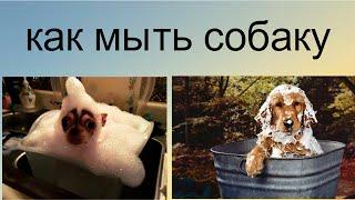 🏊🛀🏻🐶Как мыть собаку #дома #уходзасобакой ✍