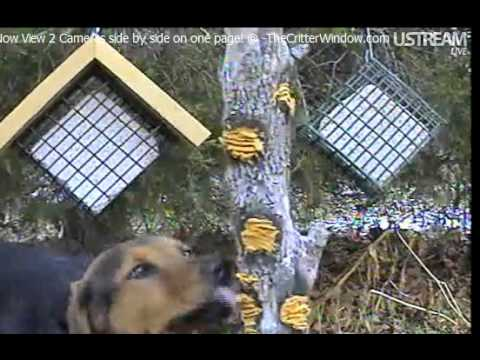 the-dog-likes-the-new-suet-cam!