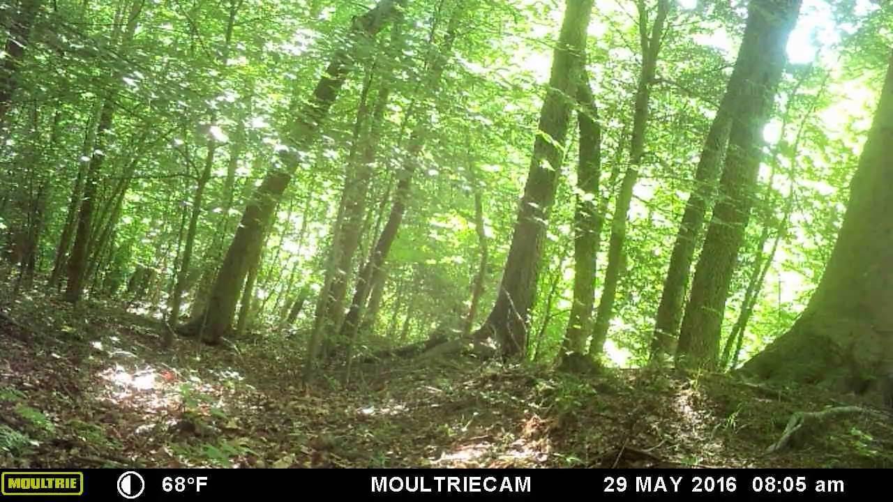 Maryland Map Anne Arundel County%0A Eastern Coyote on Trail cam in Anne Arundel County Maryland