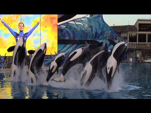 Last One Ocean show at SeaWorld San Diego 1-8-17