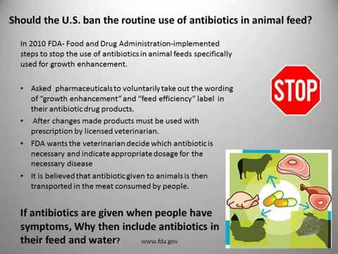 antibiotics in animal feed essay Antibiotics in food animal apua background papers situation analysis of antibiotic misuse in us administration of tylosin in feed to weaned piglets.