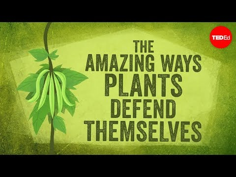 The amazing ways plants defend themselves - Valentin Hammoudi