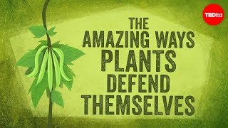 Download The amazing ways plants defend themselves - Valentin Hammoudi Mp3 and Videos