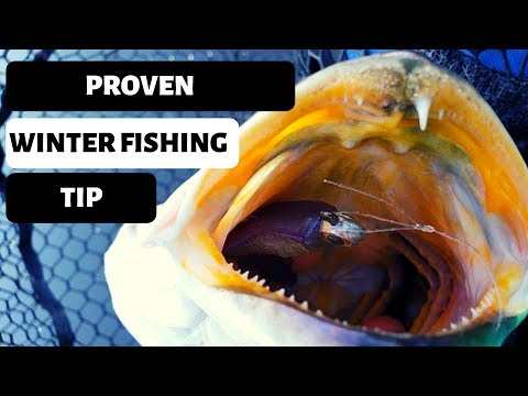 WINTER SPECKLED TROUT: Tip To Catch Speckled Trout In The Winter...