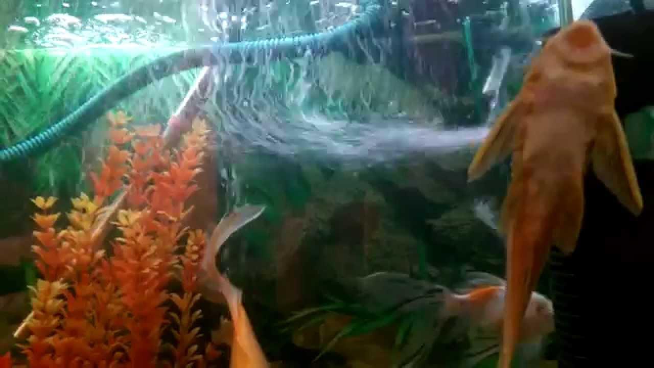 Aquarium Home Nepal Youtube