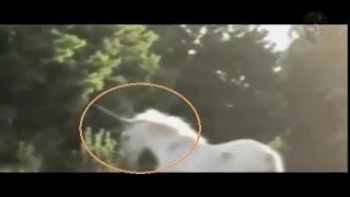 Снятые на камеру Единорог реально существует.Captured on camera the Unicorn really exists.