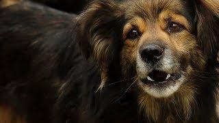 Свора собак в Темрюкском районе держит в страхе весь поселок