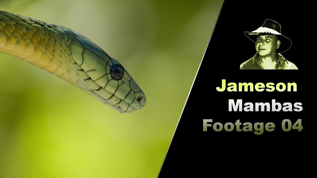 Mamba jamesons