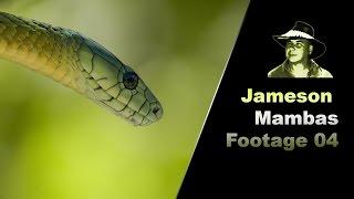 Jameson Mamba Stock Footage 01