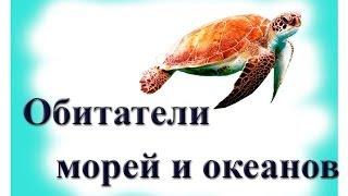 Рецепт: Торт Шоколадный Мусс - все рецепты России 63