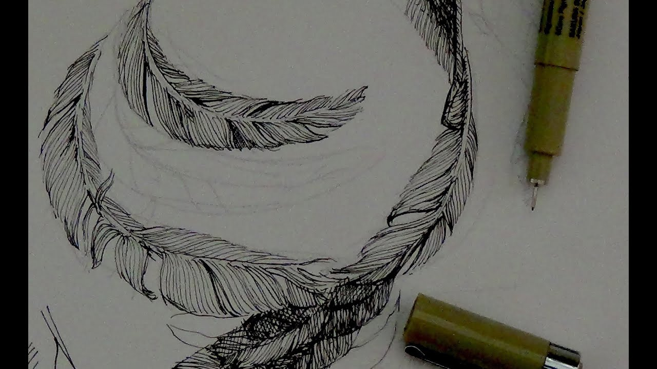 Line Drawing Feather : Pen ink drawing tutorials how to draw feathers with