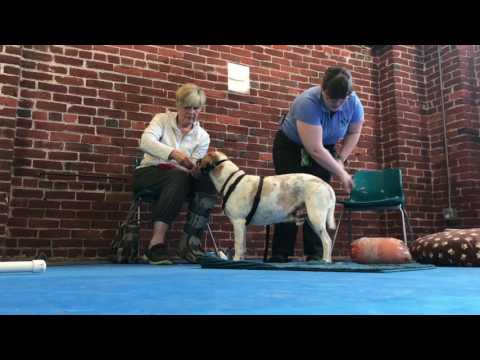 Dog Training for Fear Free Vaccines and Vet Visits