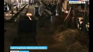 15.04.13 Вести Поморья ферма(Новости из Мезенского района. Рыбколхоз