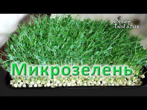 Выращивание зелени дома. Мята, розмарин, салат, базилик