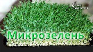 Микрозелень (Microgreens). Выращивание микрозелени. Природное земледелие