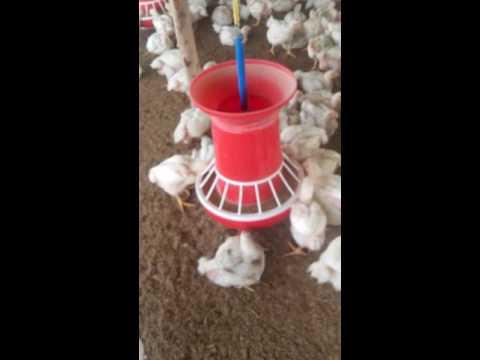 Sabir poultry farm