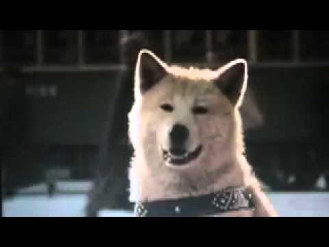 Clip cảm động về chú chó Hachiko :-s