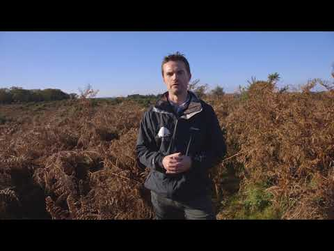 Bronze Age barrows - New Forest History Hits