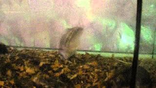 Приколы Про Животных. Пьяные Мышки