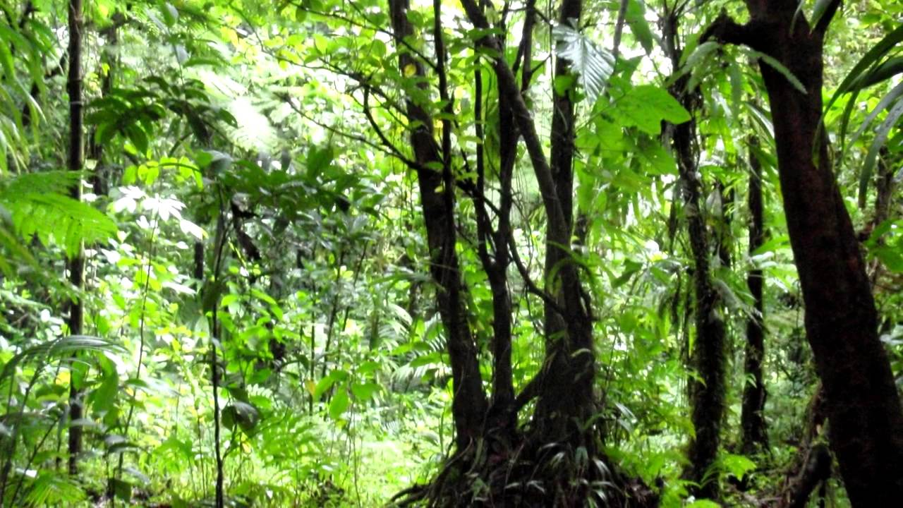 Jungle Sounds and Pictures - YouTube