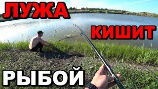 Бюджетный Карпфишинг Рыбалка на карпа и карася Ловля на флэт метод фидер поп ап и пружину