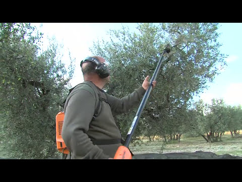 Peigne Vibreur Électrique Professionnel // Professional Electric Shaker Rake Olivion