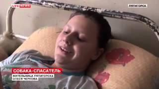 В Пятигорске собака спасла девочку, чуть не попавшую под трамвай