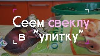 Сеем свеклу в 'улитку' (07.03.2016 г.).