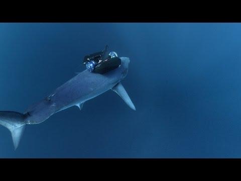 Mako Sharks Launch Like Rockets