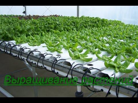 видео: Гидропоника. Выращивание растений в домашних условиях. Бизнес идея.