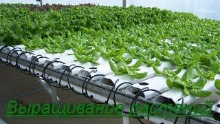 Гидропоника. Выращивание растений в домашних условиях. Бизнес идея.(Гидропо́ника — это способ выращивания растений на искусственных средах без почвы. При выращивании гидропо..., 2016-03-14T10:02:48.000Z)