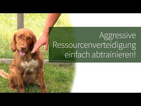 Ressourcenverteidigung Hund ► Aggressive Ressourcenverteidigung Einfach Abtrainieren!