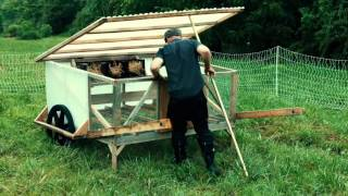 DIY Chicken Coops + Cutting Feed Costs 100%