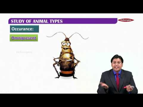 CLASS XI MH - PCMB Biology -Introduction-Study of animal types