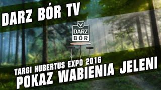 Studio Darz Bór - Wabienie Jeleni Pokaz na Targach Hubertus Expo 2016