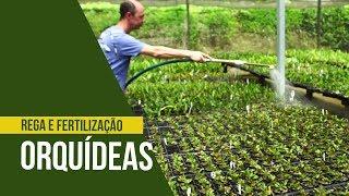 Orquídeas Processos De Rega E Fertilização Nô Figueiredo