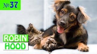 ПРИКОЛЫ 2017 с животными. Смешные Коты, Собаки, Попугаи // Funny Dogs Cats Compilation. Февраль №37