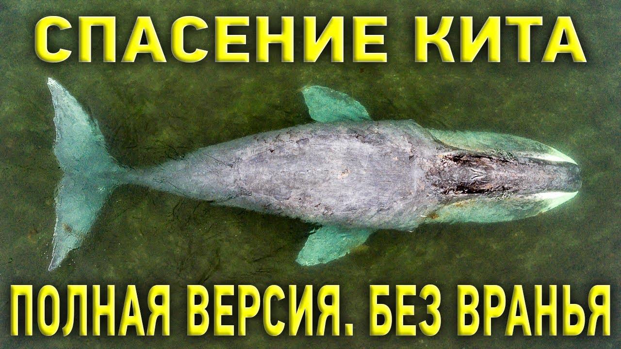 Гренландский кит и русское раздолбайство: как на самом деле