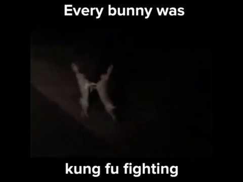 16485f390 Every BUNNY Was Kung Fu Fighting!!! (Antidepressor) - YouTube
