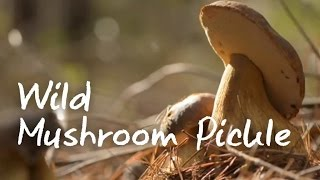 How To Make Pickled Mushrooms - Green Renaissance