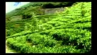 Tea Board of India presents Discover the Magic of Indian Tea