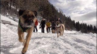 border terrier winterwanderung